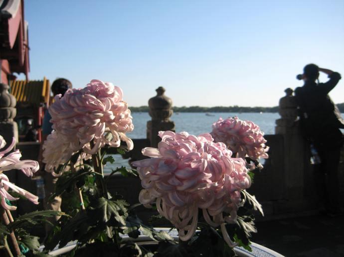the lake at the summer palace