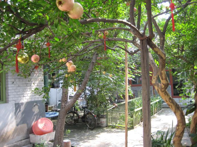 a courtyard house in the hutong blooming with pomegranates