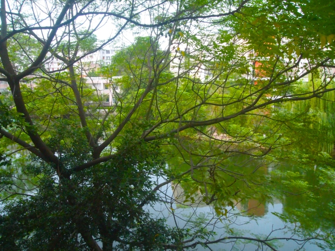 the view of the pond out my apartment window my first morning in Nanning