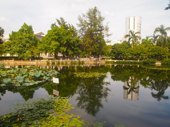 Lotus pond on campus