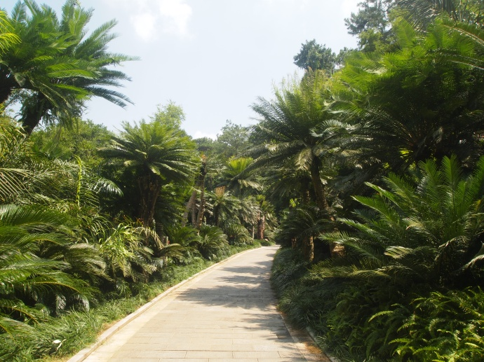 walkway through the Cycad Garden