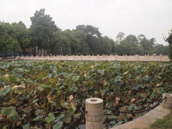 Bridge over the lotus pond