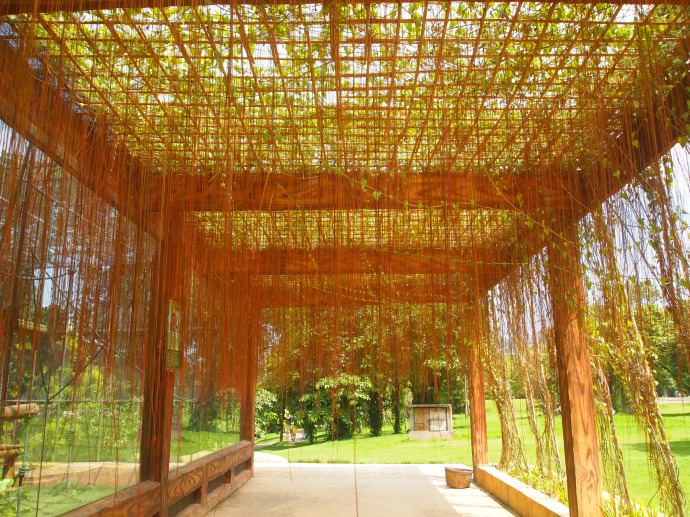 walkway with threadlike vines