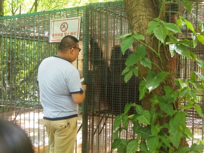 a visitor feeding junk food to the orangutan
