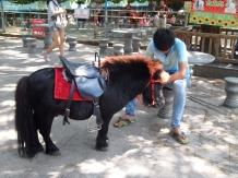 bored pony and boy