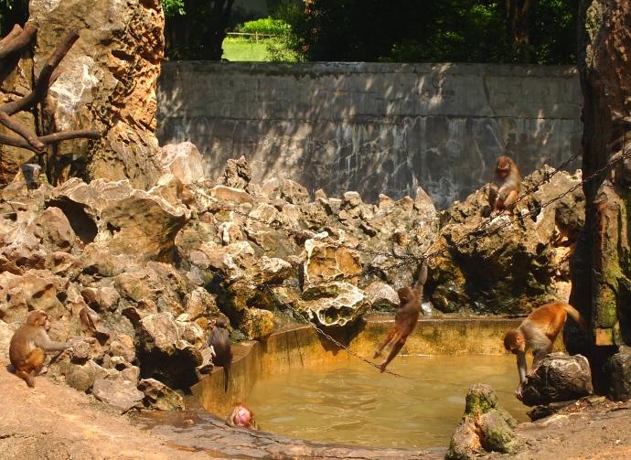 a monkey playground