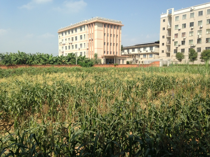farmland around the Agricultural College