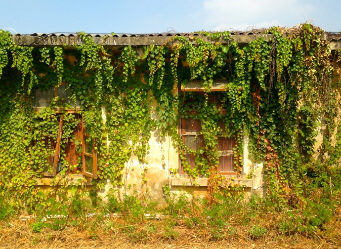 a house overtaken by nature