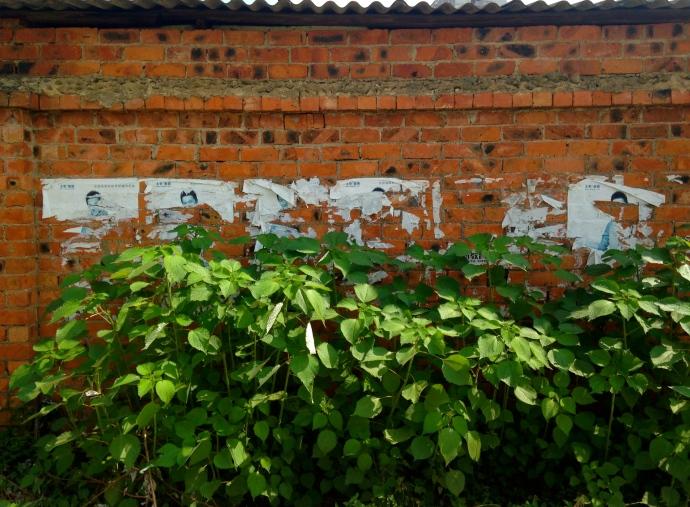 wall & foliage