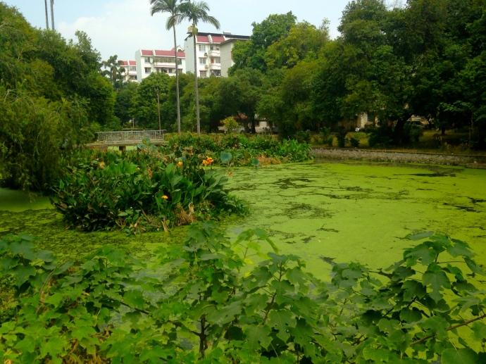 a murky pond