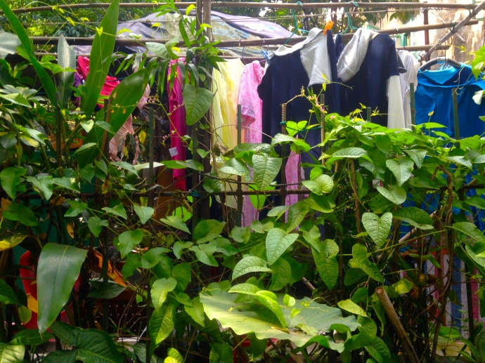 laundry peeking from behind shrubbery