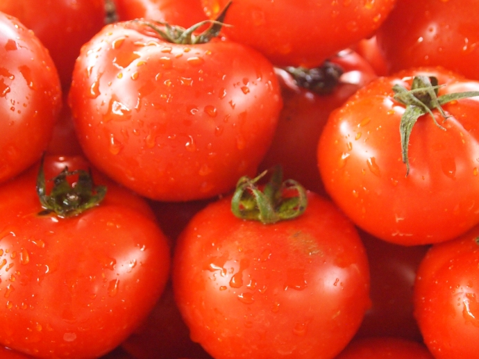 dewdrop tomatoes
