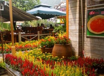 Flowery coffee shop