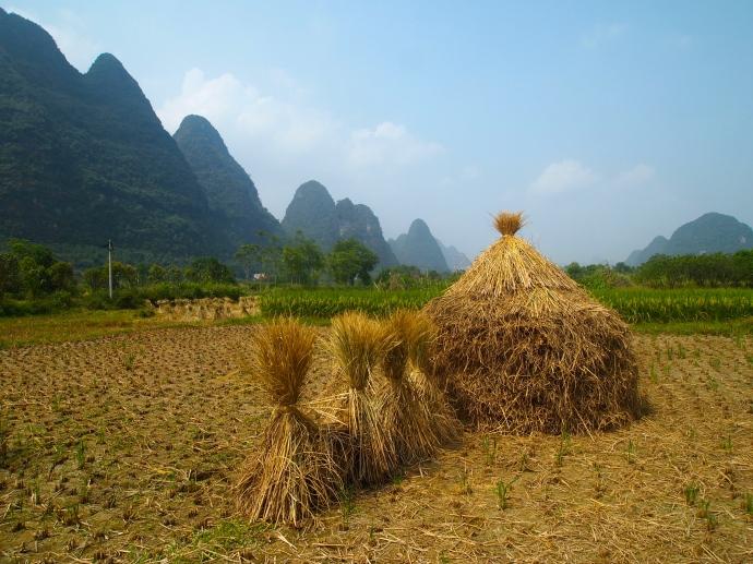 haystacks mirror the karst landscape