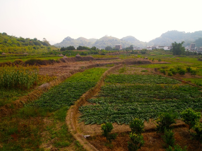 Farmland north of Yangshuo