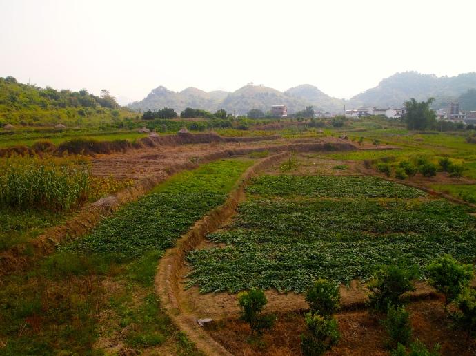 Farmland north of Yangshuo