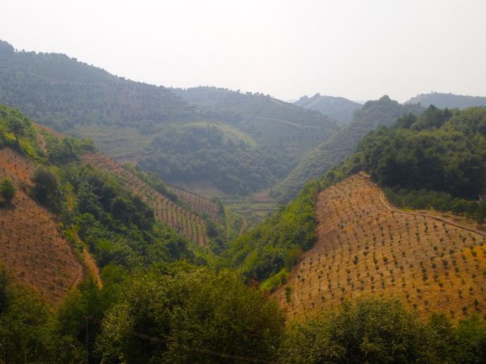 more farmland