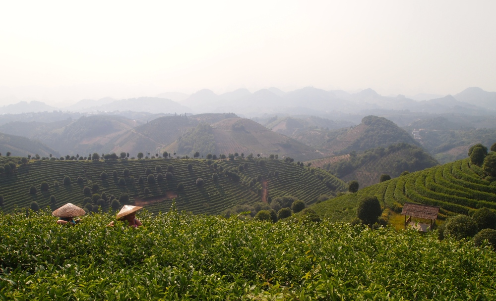 the seven star tea plantation and return to yangshuo (6/6)