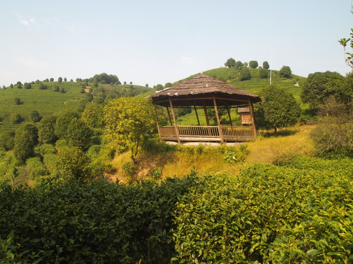 the leaning gazebo at Seven Star Tea Plantation