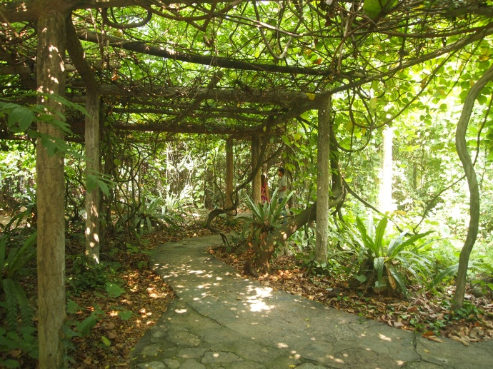 pathways under trellises covered in vines
