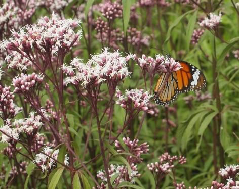 butterfly in the butterfly garden