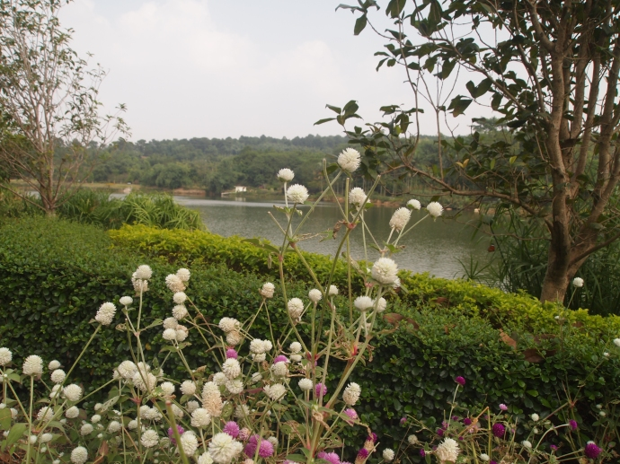 the artificial lake