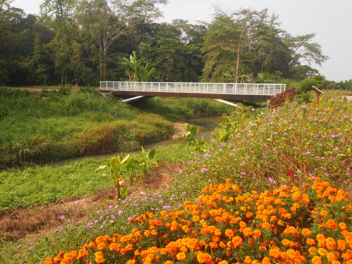 bridge back from the lake to the forest garden