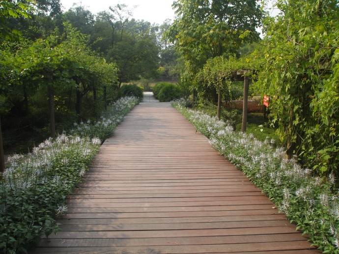 pathway bordered by whimsical white flowers