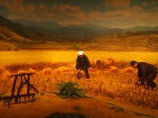 Zhuang in the fields