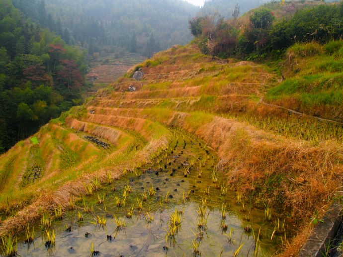 water-filled terraces