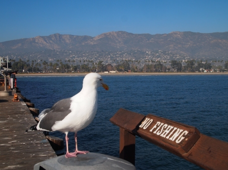 No fishing at Stearns Wharf