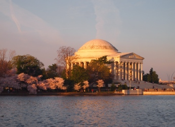 Cherry blossoms on the Tidal Basin