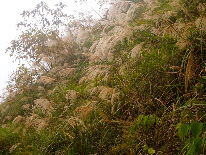 grasses galore