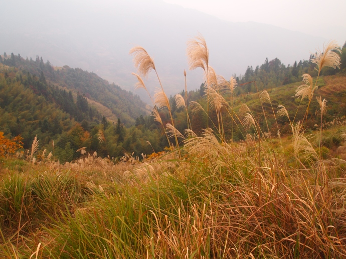 ornamental grass frame of the mountains