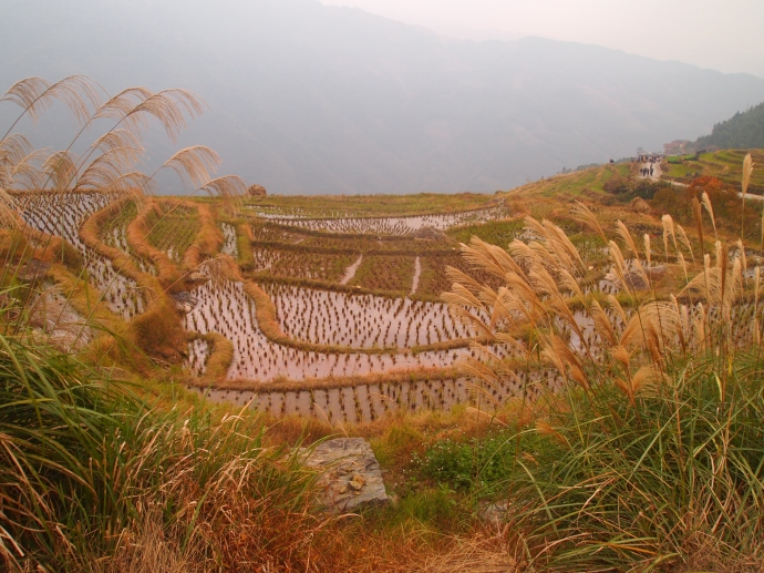 terraces in Longji