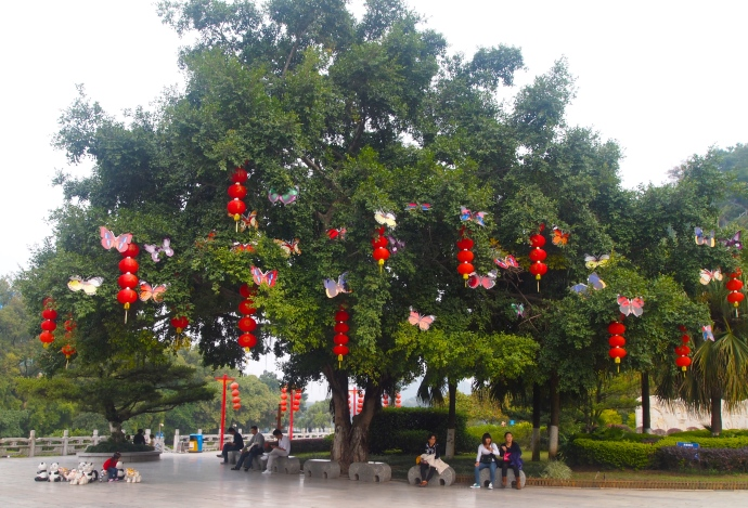 tree of lanterns