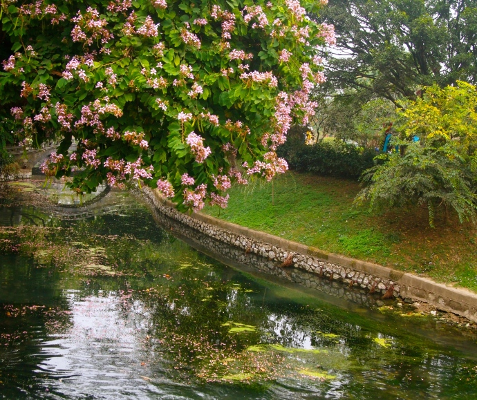 flowering trees over the canal