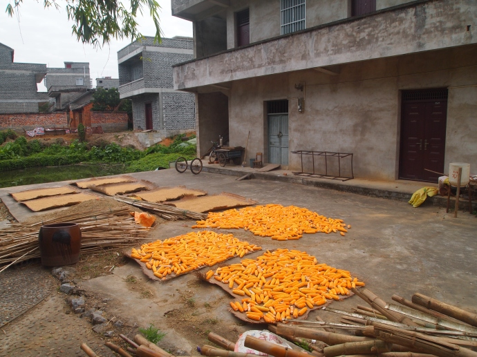 drying vegetables and grains