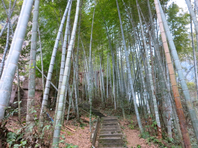 Bamboo grove - photo taken by Mike
