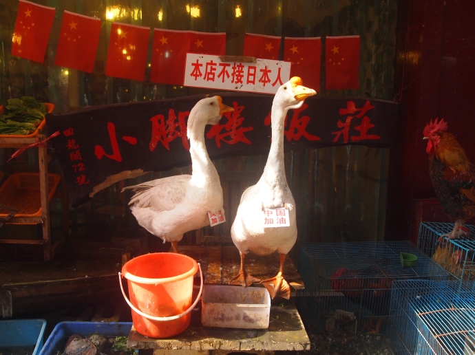 "with ducks wearing signs.  And apparently, I'm told, that says ""Japanese not welcome here."""