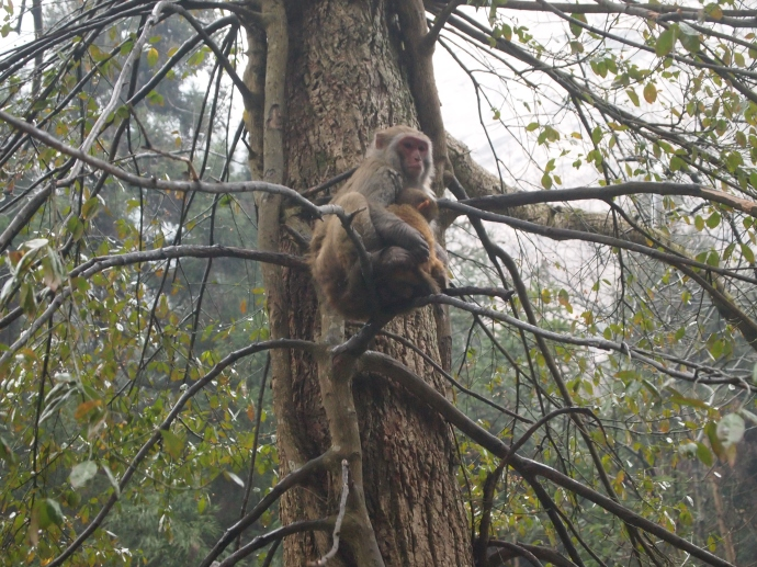 monkeys at Zhangjiajie
