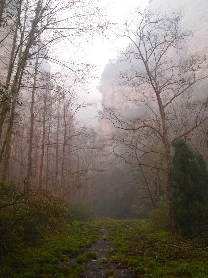 misty views