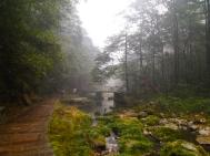 Bridge over Golden Whip Stream