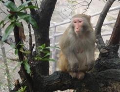 a pensive fellow
