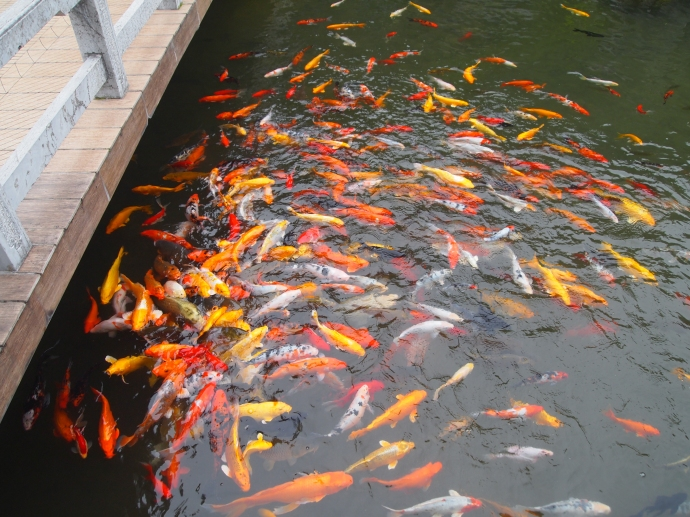 Koi pond at the Guilinyi Royal Palace Hotel