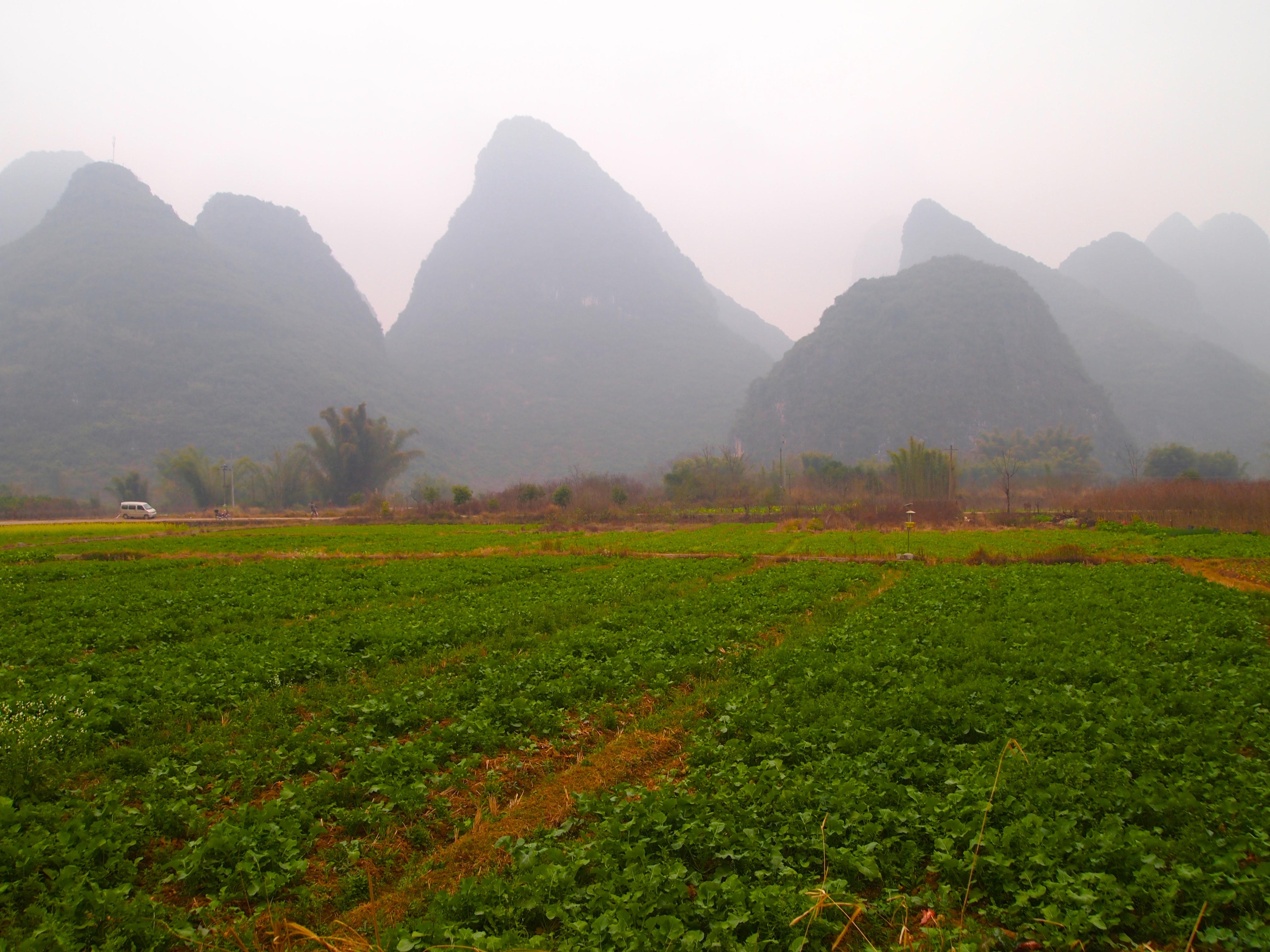 Why China needs bigger farms - Dreaming big  |China Farmland