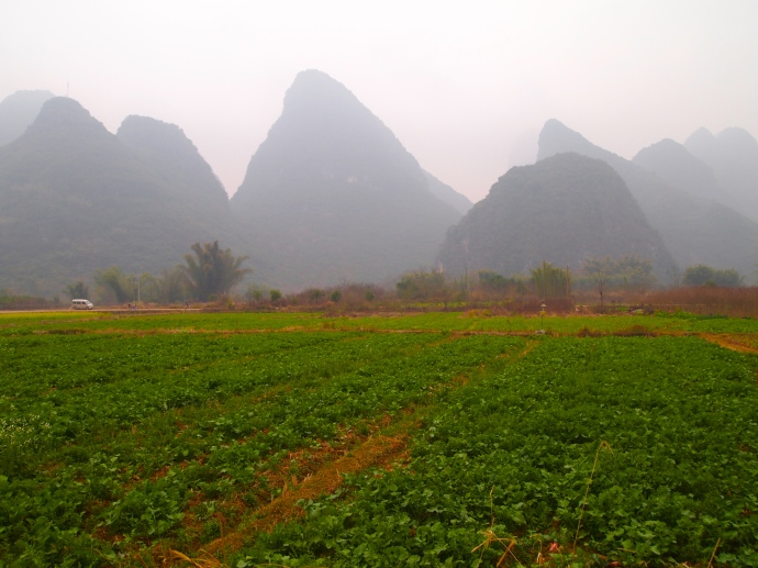 Farmland and karsts outside of Yangshuo