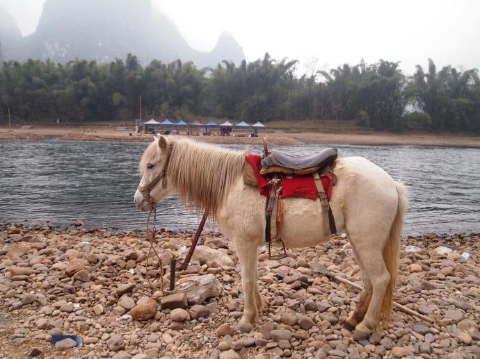 a ride on a pony, anyone?