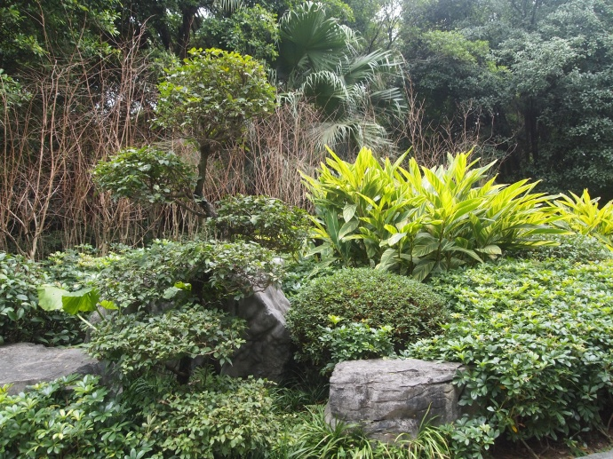 tropical abundance
