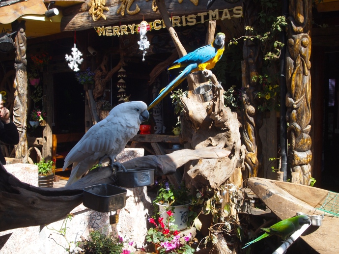tropical birds along the canal